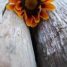 Fallen flower (Front) by Chanzz