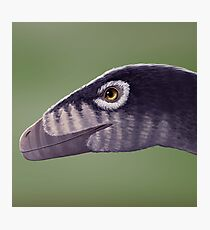 Troodon Photographic Print