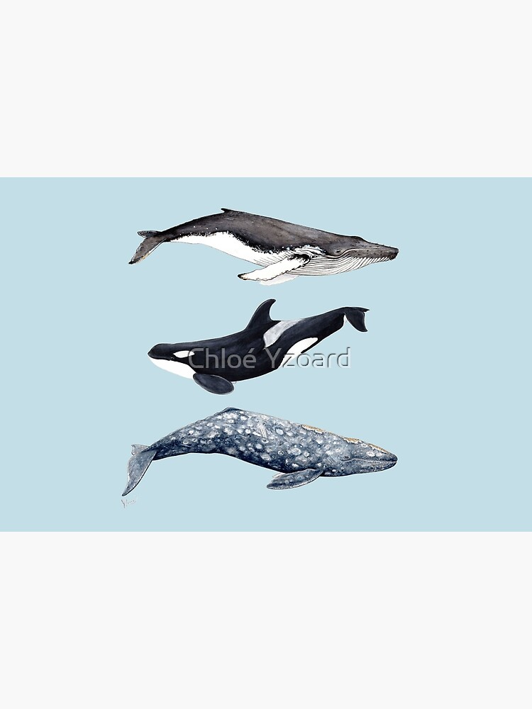 Orca, humpback and grey whale by CHLOEYZOARD