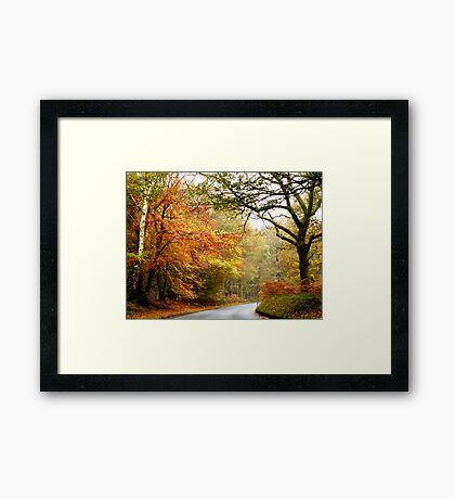 Road into Autumn Framed Print