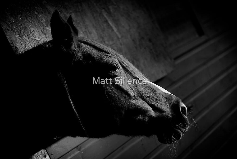 Race horse by Matt Sillence