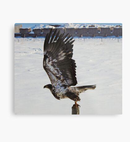 Take to the Air Metal Print