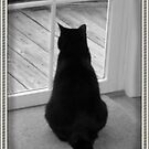 Black Cat looking for squirrels by maryevebramante