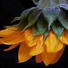 Summer Delight by Sue Cotton
