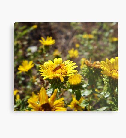 Yellow on Yellow Metal Print
