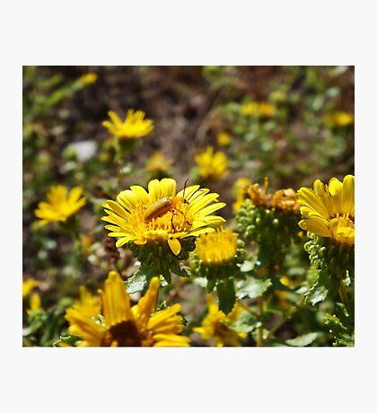Yellow on Yellow Photographic Print