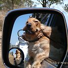 Yippee We're Going Camping by aussiebushstick
