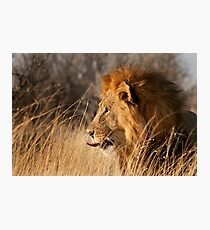 Contemplating Dinner, Etosha National Park Photographic Print