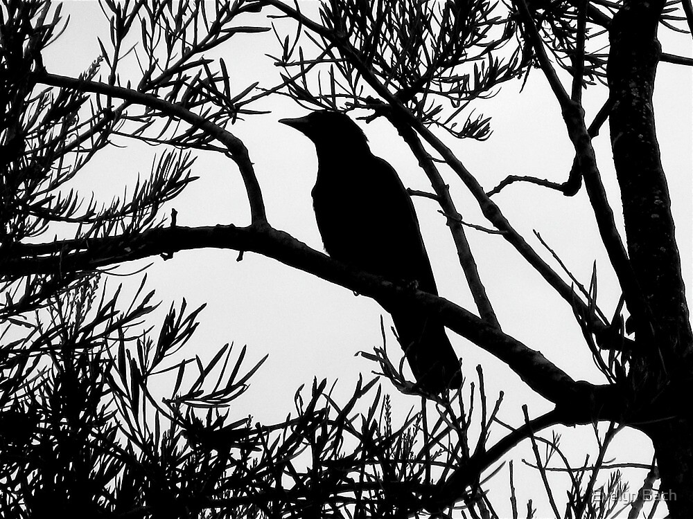 raven-tree stencil by Evelyn Bach