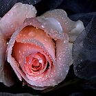 """""""Romance & Roses ..."""" by Rosehaven"""