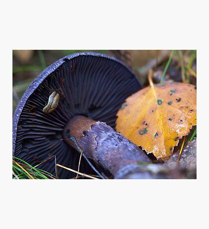 A slug at his work Photographic Print