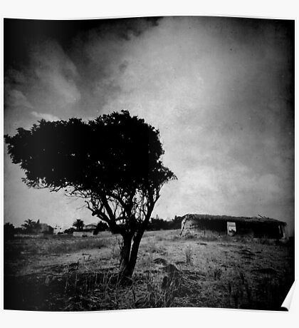 abandoned tree I Poster