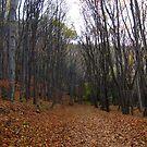 Foliage by Maria1606