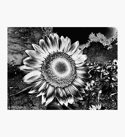 Sunflower Fields Forever Photographic Print