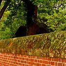 Wall by Roger Sampson