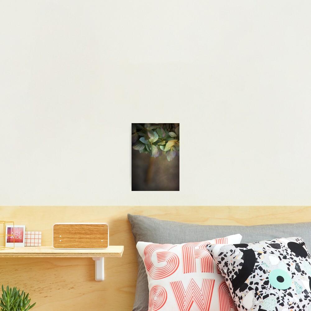 Hydrangea  Photographic Print