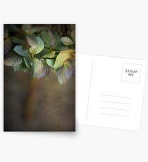 Hydrangea  Postcards
