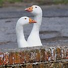 Two Headed  Goose by relayer51