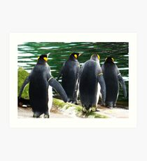 Penguin Parade, Edinburgh Zoo Art Print