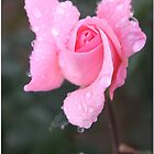 In The Pink by Chet  King