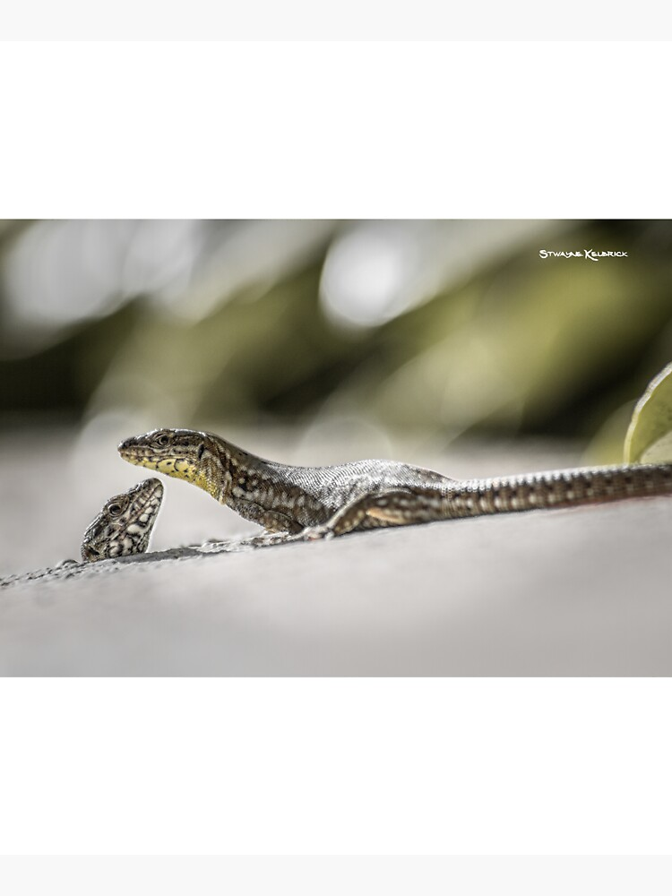 The charming lizards by Stwayne