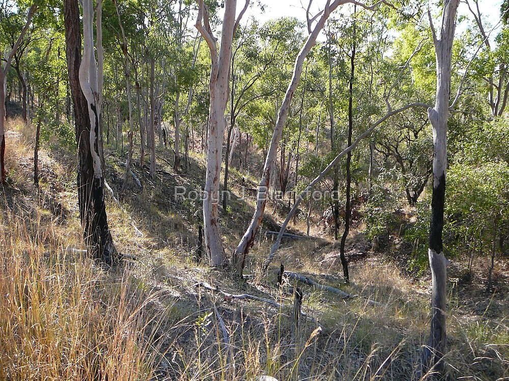 Dry and Rugged Terrain in the Australian Bush by aussiebushstick