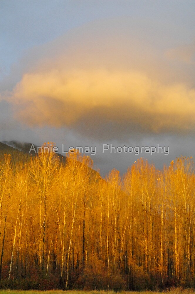Crazy days by Annie Lemay  Photography