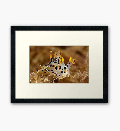 Winged Thecacera Framed Print