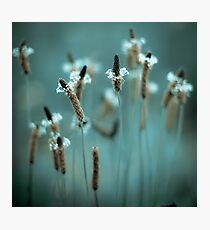 ...sparklers... Photographic Print