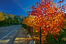 Fall On A High Country Road by photosbyflood