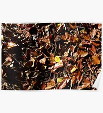 Autumn leaves on ground - brown Poster