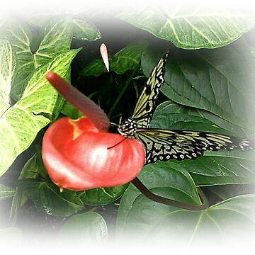 Butterfly On Flower by Jonice