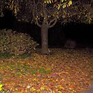 COOL AUTUMN NIGHTS by deegarra
