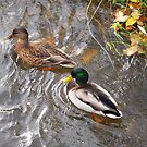 Mrs. and Mr. Duck by vbk70