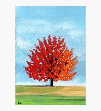 Burst of Red - tree landscape Photographic Print