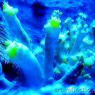 Plumose Anemones  by Ingrid Funk
