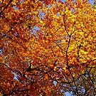 Autumn Birch Leaves by EventHorizon