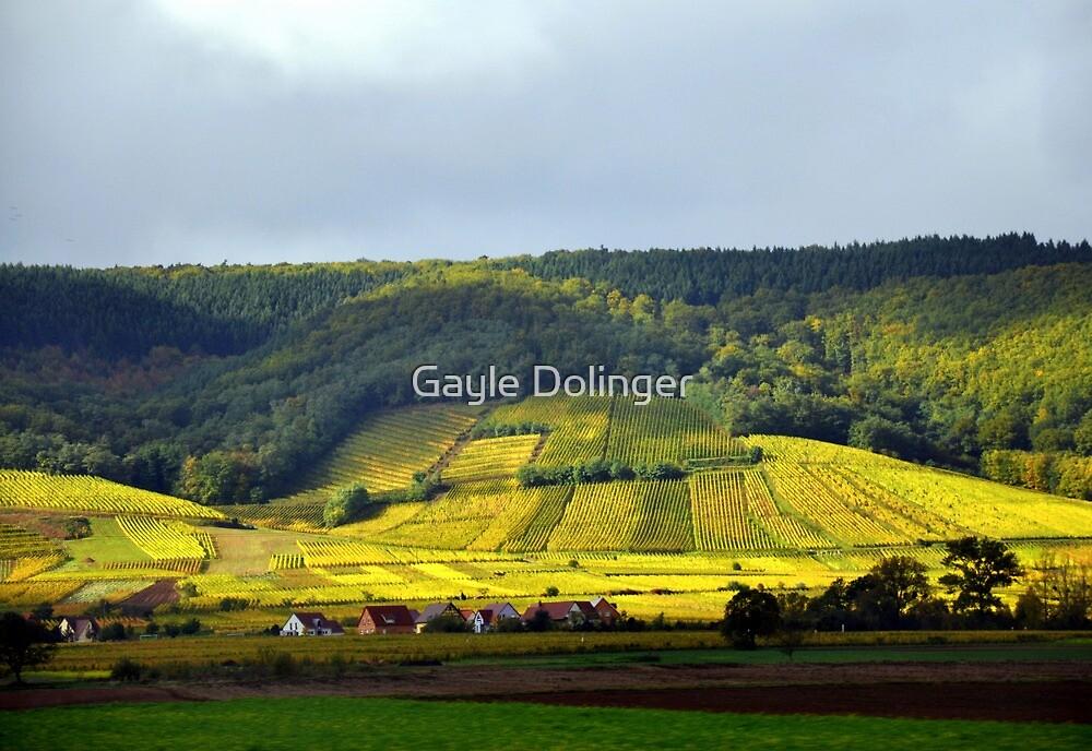 On the Road: Vineyards in France by Gayle Dolinger