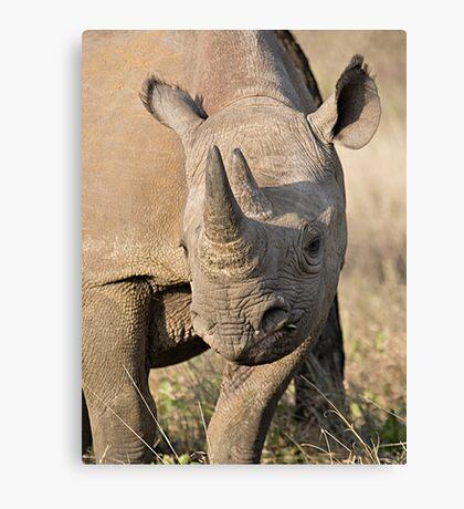 Black Rhino Close Up  Canvas Print