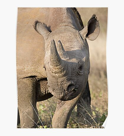 Black Rhino Close Up  Poster