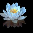 Water Lilly Meditation by Gregory J Summers