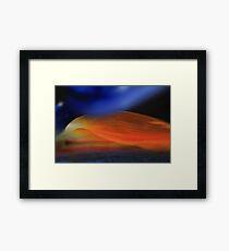 Strelitzia Morning-Bird of paradise bloom Framed Print
