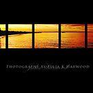Sunset on black ~ Signature Series by JuliaKHarwood