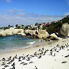 Penguin Paradise by Carisma