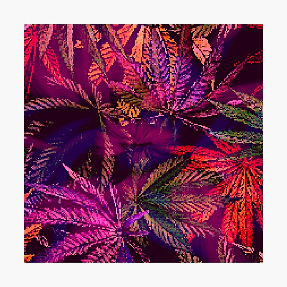 Dank Red Pink and Purple Marijuana 420 Cannabis Print Photographic Print