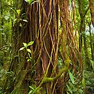 Forest Series: Big and beautiful - Costa Rican Rainforest by Tracy Riddell