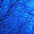 Snowy branches at night by maryevebramante