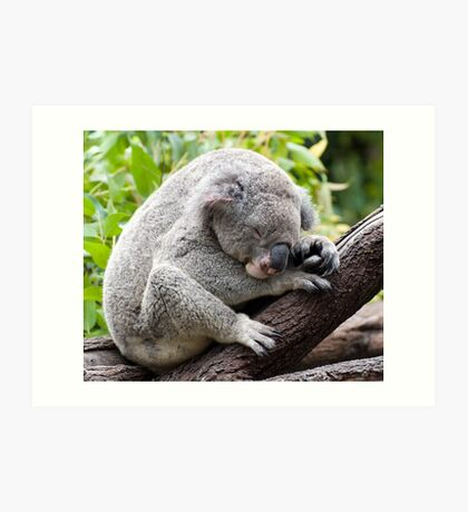 How much can a koala bear ???   Art Print