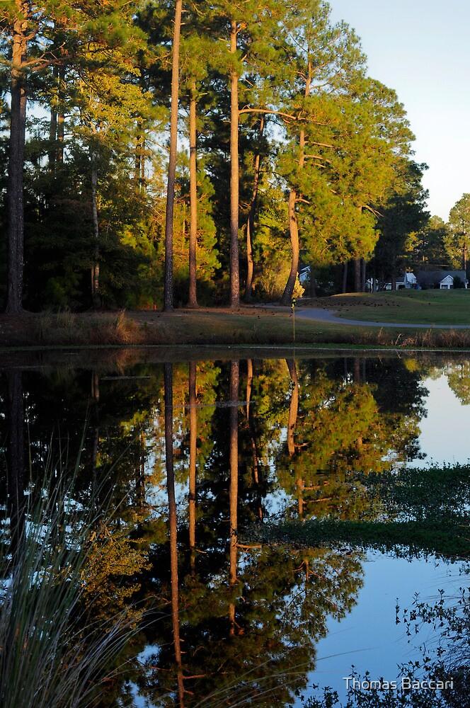 Backyard Reflection by TJ Baccari Photography