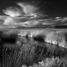 Lee Creek by Clayhaus